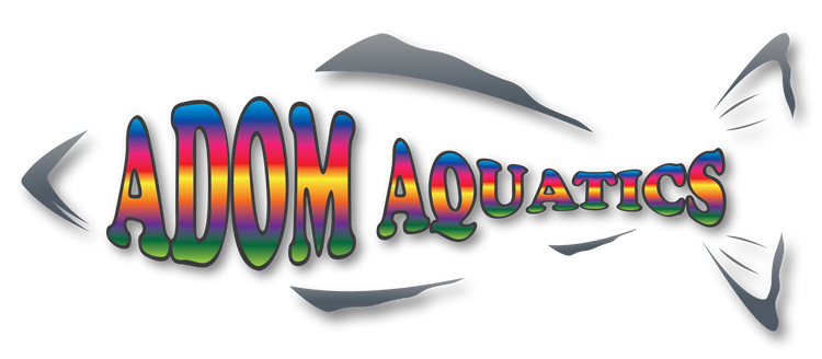 Adom Aquatics Swim School